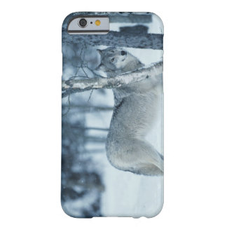 Wolf (Canis lupus) during Winter Barely There iPhone 6 Case