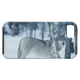 Wolf (Canis lupus) during Winter Case For The iPhone 5