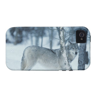 Wolf (Canis lupus) during Winter iPhone 4 Covers