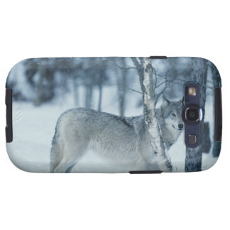 Wolf (Canis lupus) during Winter Galaxy S3 Case
