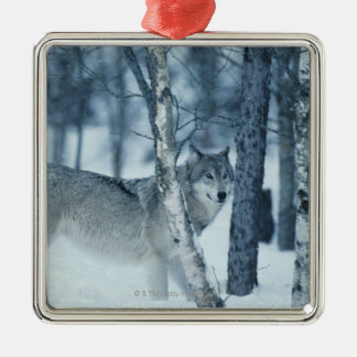 Wolf (Canis lupus) during Winter Christmas Ornament