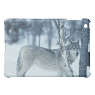 Wolf (Canis lupus) during Winter iPad Mini Cover