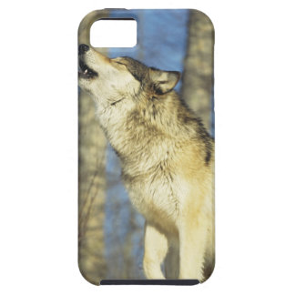 Wolf (Canis lupus) howling, close-up, Canada Case For The iPhone 5