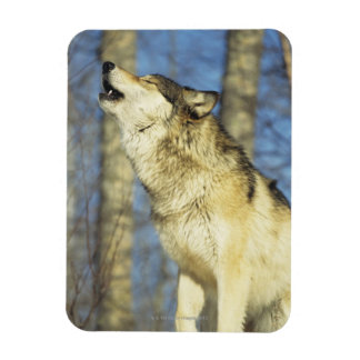 Wolf (Canis lupus) howling, close-up, Canada Rectangular Photo Magnet