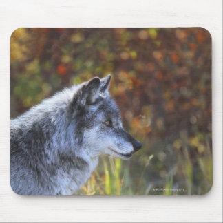 Wolf (Canis Lupus) Mouse Pad