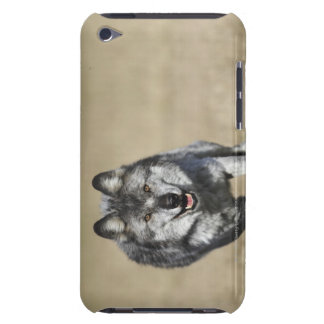 Wolf (Canis Lupus) Running Towards Camera iPod Touch Cases