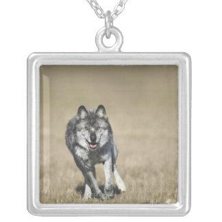 Wolf (Canis Lupus) Running Towards Camera Pendant