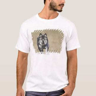 Wolf (Canis Lupus) Running Towards Camera T-Shirt