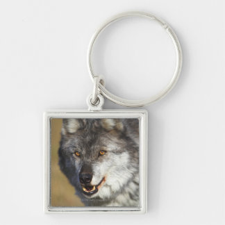 Wolf (Canis Lupus) Silver-Colored Square Key Ring