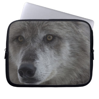 Wolf (Canus lupus) from Yellowstone National Laptop Sleeve