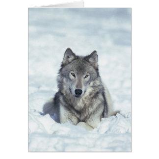 Wolf Card