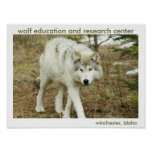 Wolf Centre Poster