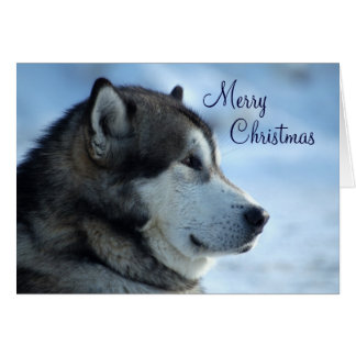 Wolf Christmas Card  - Merry Christmas
