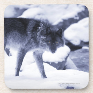 Wolf Coasters