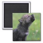 Wolf Cub Howling Fridge Magnet