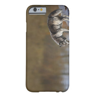 Wolf Drinking Water From A Pond Barely There iPhone 6 Case