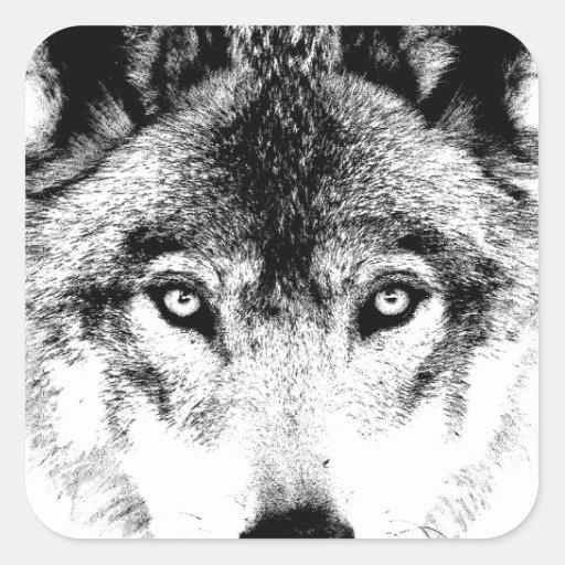 Wolf Face. Digital Wildlife Image. Square Sticker