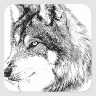 Wolf Face. Majestic Wolf Gazes Into The Distance. Square Sticker