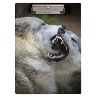 Wolf Fight Clipboard