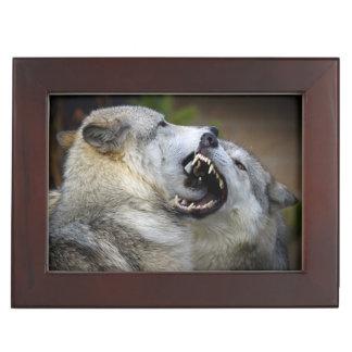 Wolf Fight Keepsake Box