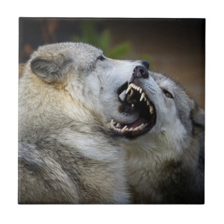Wolf Fight Tile