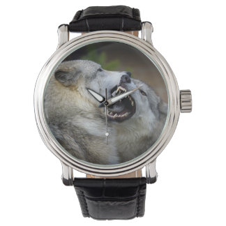 Wolf Fight Watch