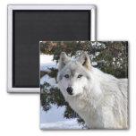 wolf fridge magnets