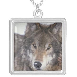 Wolf Gaze Necklace