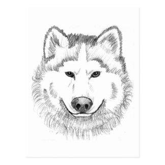 Wolf Head Sketch Postcard