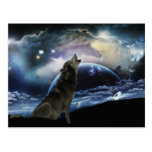 Wolf howling at the moon postcard