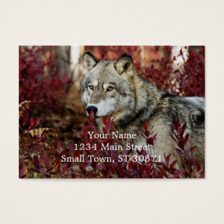Wolf in red foliage business card