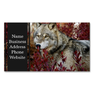Wolf in red foliage magnetic business cards