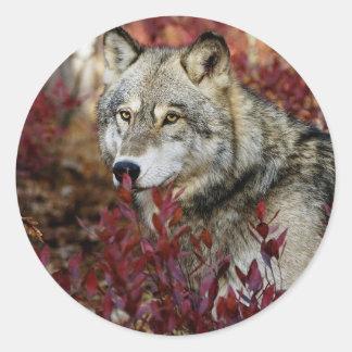 Wolf in red foliage round sticker