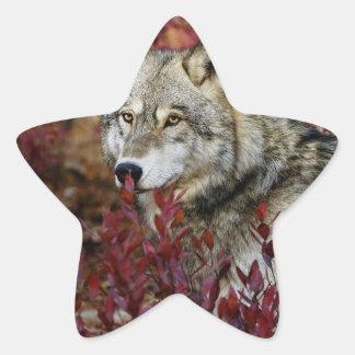 Wolf in red foliage star sticker