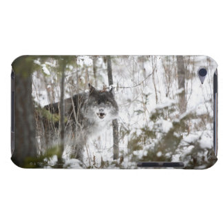 Wolf In The Forest In Winter iPod Touch Cases