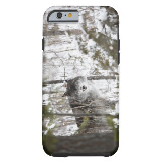 Wolf In The Forest In Winter Tough iPhone 6 Case