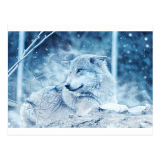 Wolf In The Snow Postcard