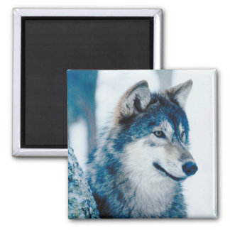 wolf in Widerness Fridge Magnet