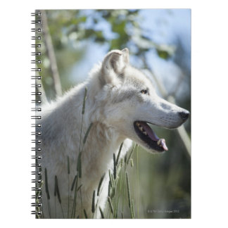 Wolf in Yellowstone 2 Notebook