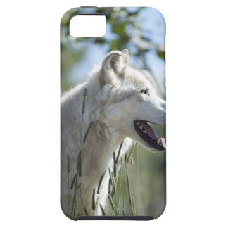 Wolf in Yellowstone. iPhone 5 Covers