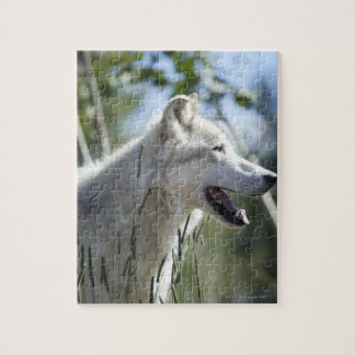 Wolf in Yellowstone. Jigsaw Puzzle