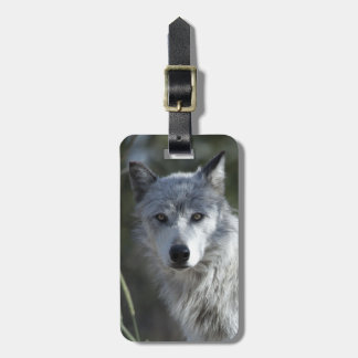 Wolf in Yellowstone Luggage Tag