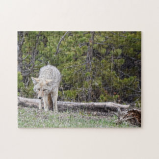 Wolf in Yellowstone Puzzle