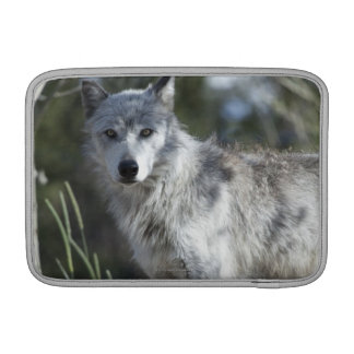Wolf in Yellowstone Sleeves For MacBook Air