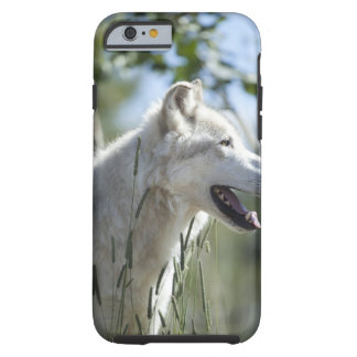 Wolf in Yellowstone. Tough iPhone 6 Case