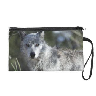 Wolf in Yellowstone Wristlet