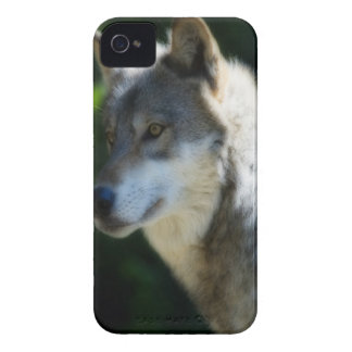 Wolf iPhone 4 cover