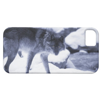 Wolf iPhone 5 Case