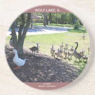 WOLF LAKE COASTER