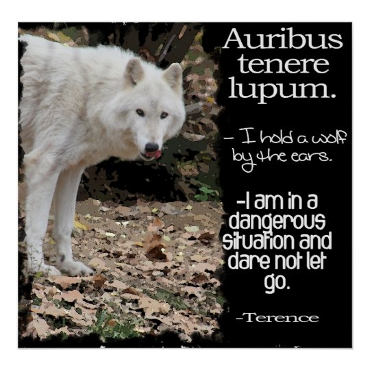 WOLF LATIN QUOTE TERRENCE POSTER